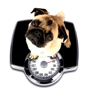 Best Scale To Weigh Your Dog