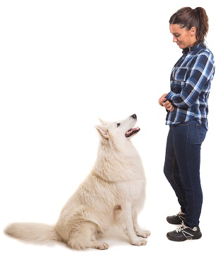Successful dog weight loss relies on the owner's mindset