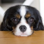 4 dog treat management tips to avoid dog weight gain