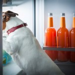 toxic dog foods lurk in your pantry