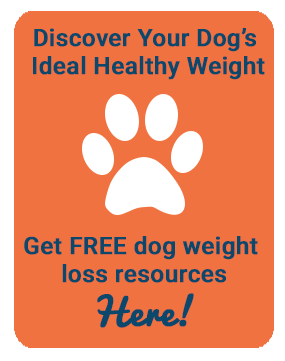 how to get your dog to put on weight